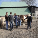 paardencoaching april 20123 010