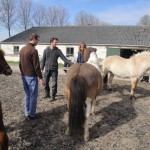 paardencoaching april 20123 011
