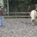 paardencoaching april 20123 019